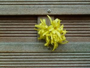 Zaun mit Blume